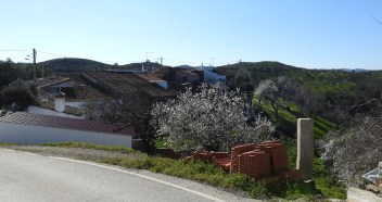 Almond blossom in the hamlet