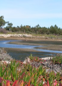 Tidal pond in 2014 - that Egret is there!