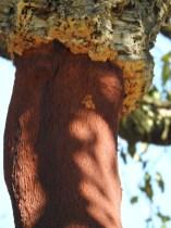 Youngish tree