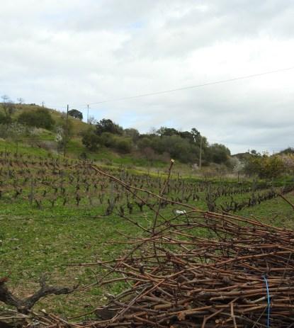 More vines!