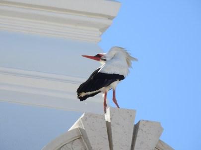 Happy stork!