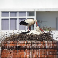 Great nest
