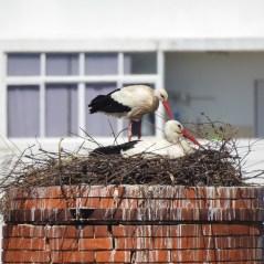 Great nest