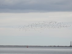 Multiple flocks in the sky