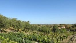 Farm in Cruz de Alta Mora