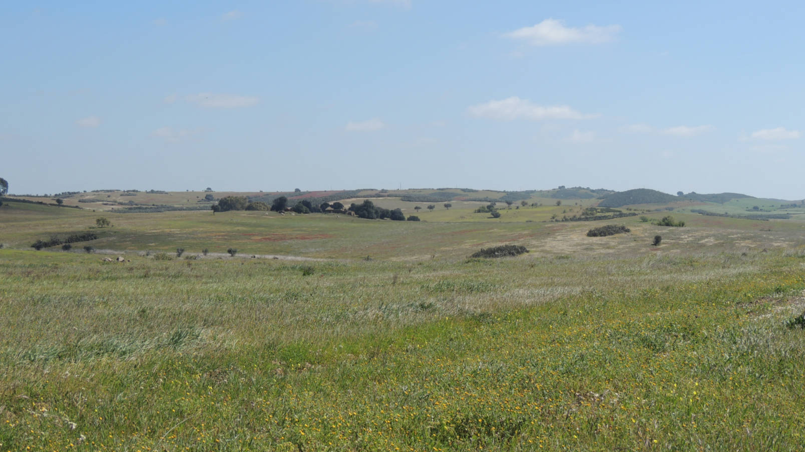 Birding in the Uplands of Alentejo