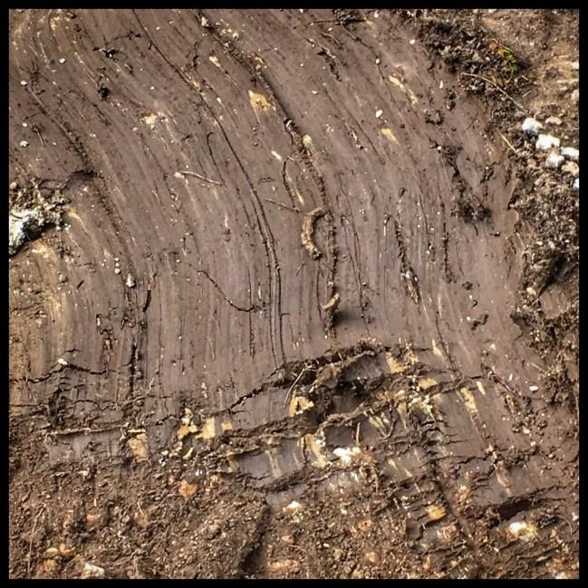 Strange tracks in the mud.