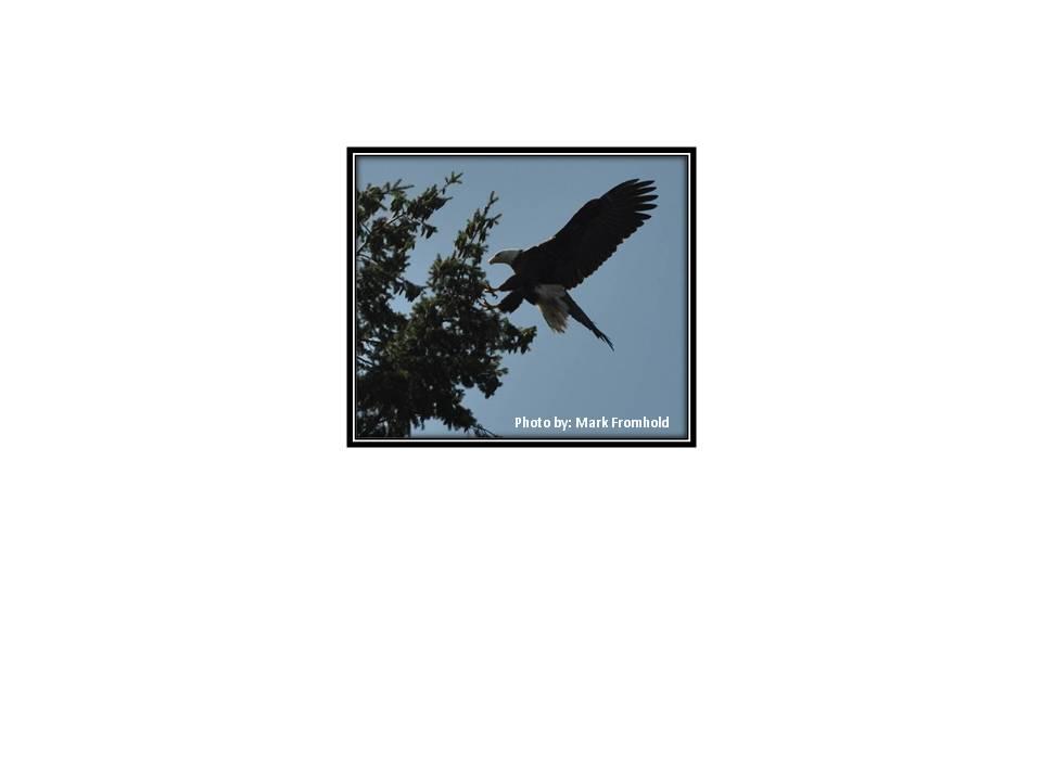 Eagle by Mark
