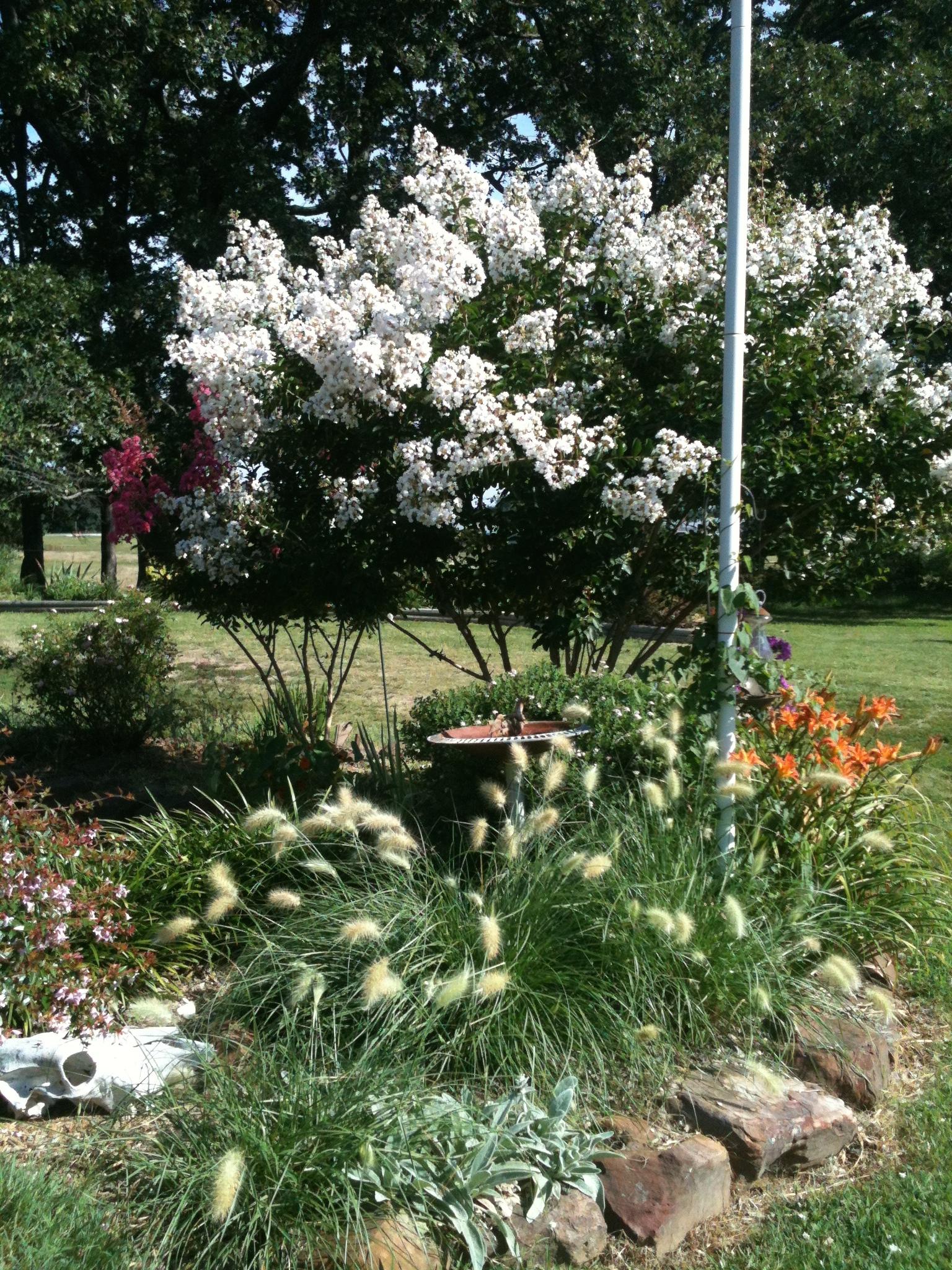 Crape Myrtle | Becky\'s Flower Farm - NW Arkansas