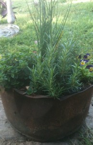 Herb container with Rosemary