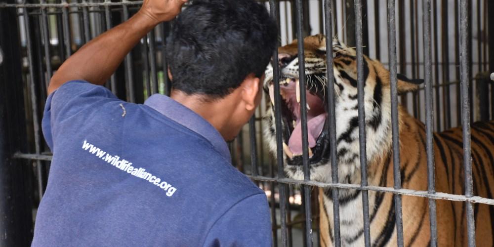 Visiting The Phnom Tamao Rescue Centre In Cambodia