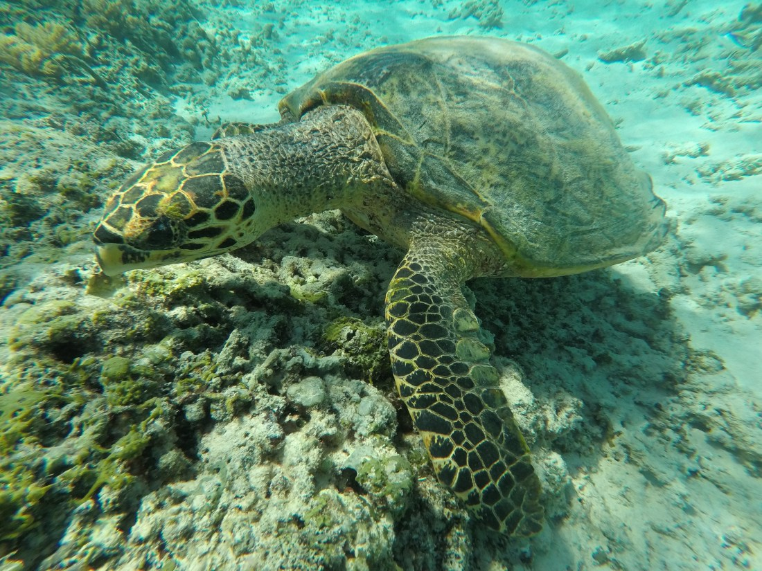 Ultimate Guide To The Gili Islands, Indonesia