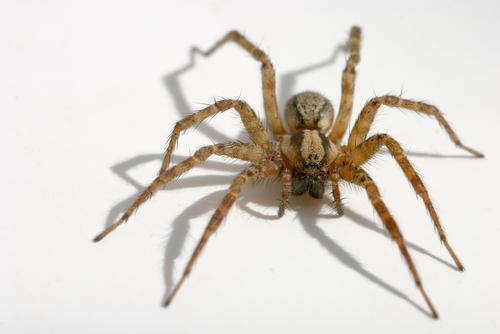 spider6queensexterminator