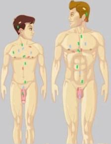 Pe-Enlargement-Bible-Puberty-Biochemicals-Nutrients-Penis-Enlargement-Bible-PE-Bible-Becoming-Alpha-Male