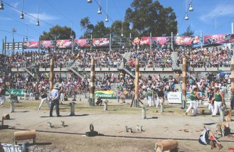 Full house at the woodchopping arena
