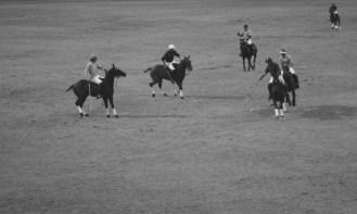Polo match: NSW vs QLD