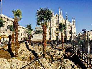 The construction of the Palm grove in Milan