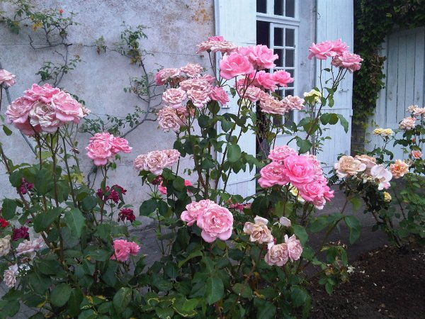 rose garden French Rose Garden Delights | Becoming Madame