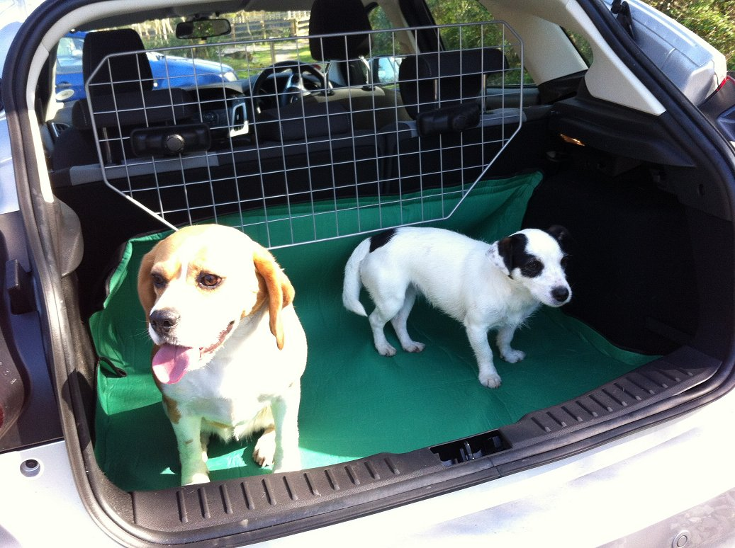Our dogs, Megs and Gemma in the boot of the car.