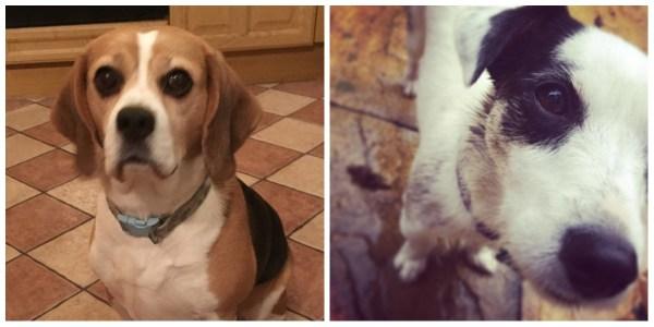 Dogs - Megs & Gemma