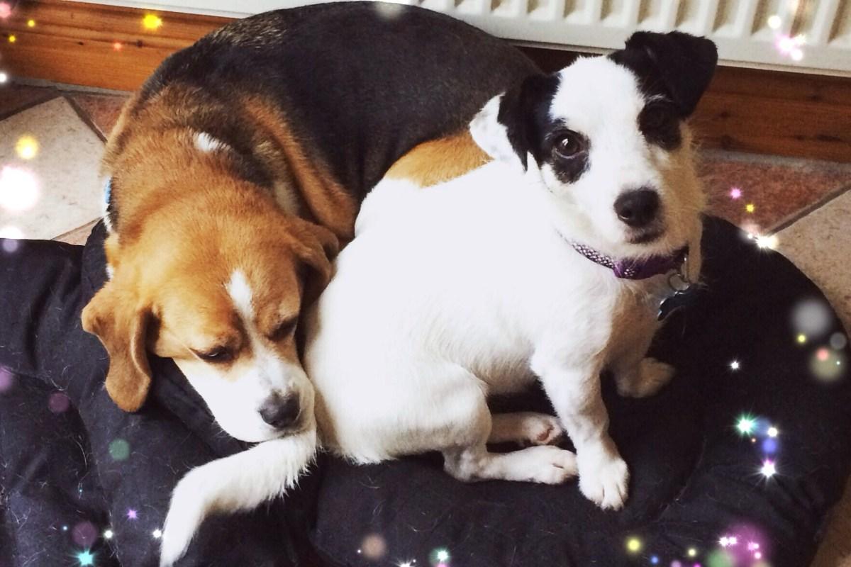 Megs & Gemma