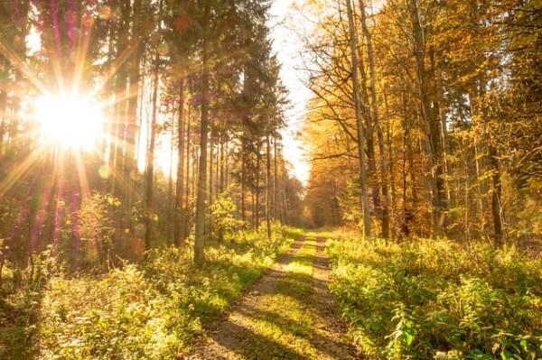 Autumn Trees and Sun