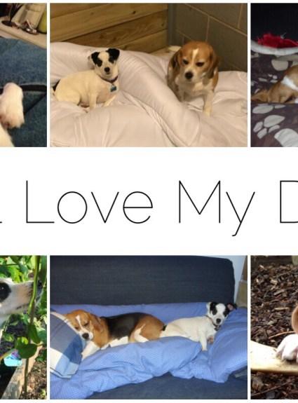 *** I Still Love My Dogs ***