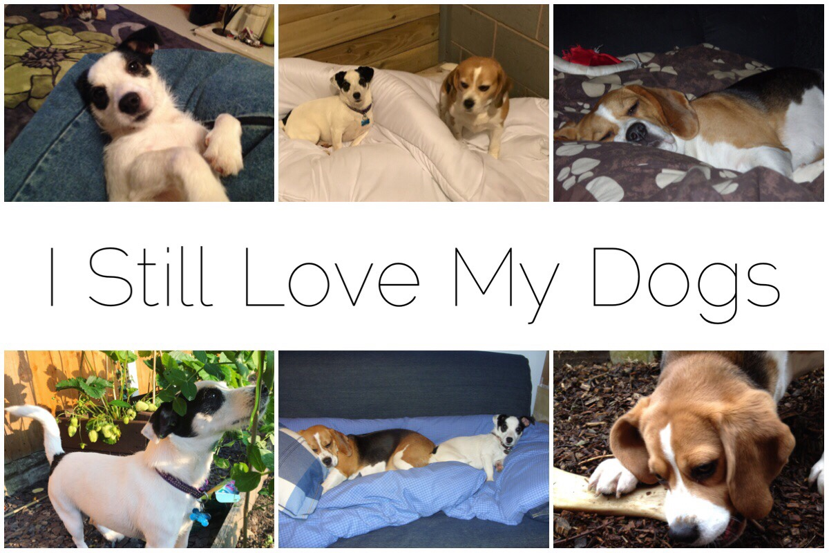 6 images of the pups