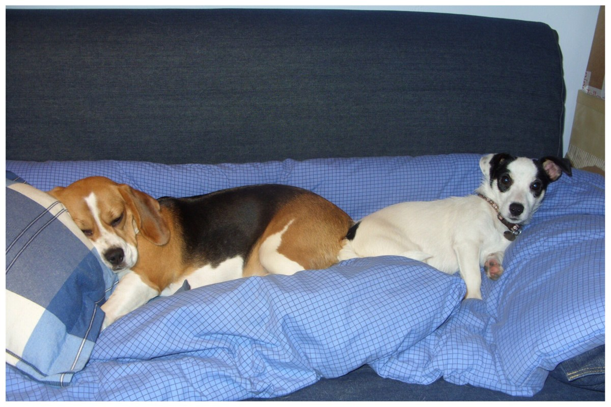 Megs and Gemma on their comfy blue bedding