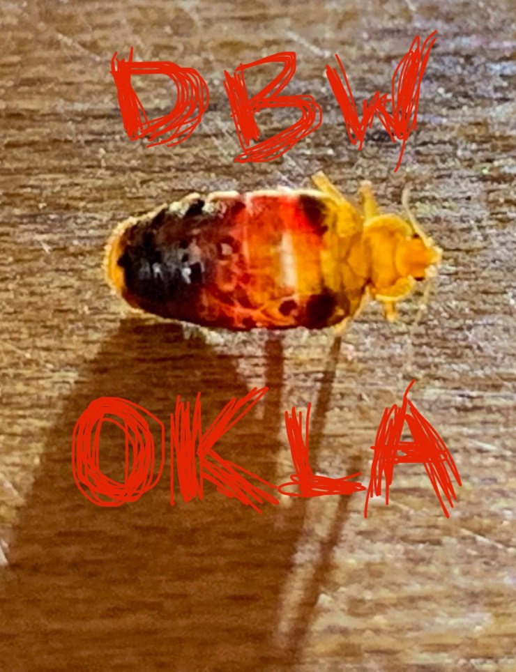 Bed bug heat, Bed Bug Heat Treatment Services Tulsa OK/ N.E. OK