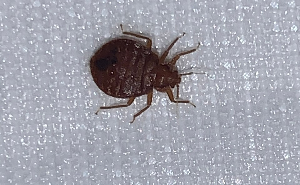 , Bartlesville OK- Bed Bug Treatment Heat
