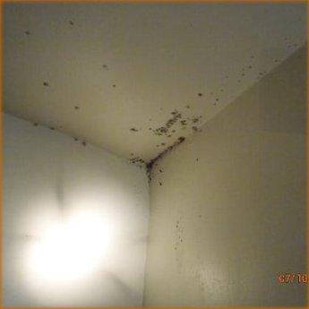 bedbugs on the ceiling corner