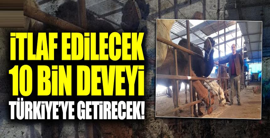 İYİ Partili Aytekin Kaya Türkiye'ye 10 bin deve getirtecek