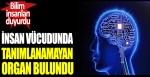 Bilim insanları duyurdu: İnsan vücudunda tanımlanamayan organ bulundu