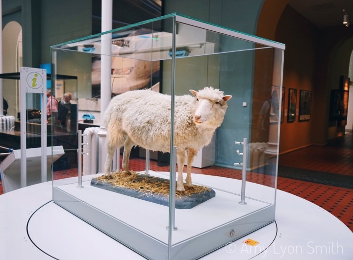 Come check out five can't miss exhibits at The National Museum of Scotland in Edinburgh. I've title this series safety, science, and religion.