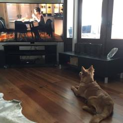 saucy-watching-tv