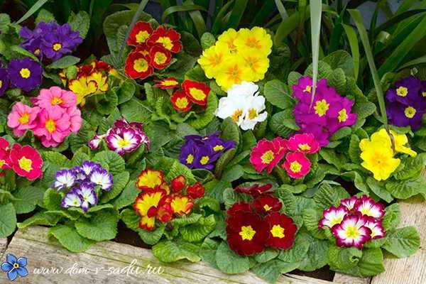 Цветы многолетники для сада неприхотливые долгоцветущие в ...