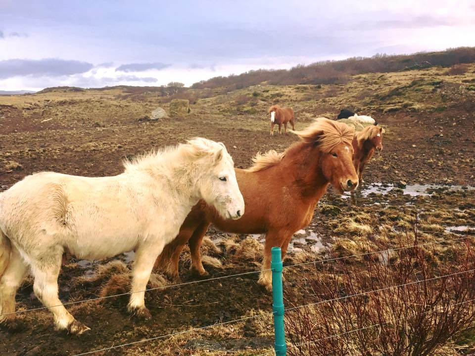 The Perfect 3.5 Day Iceland Itinerary Full Of Waterfalls, Horses, And More Beautiful Things