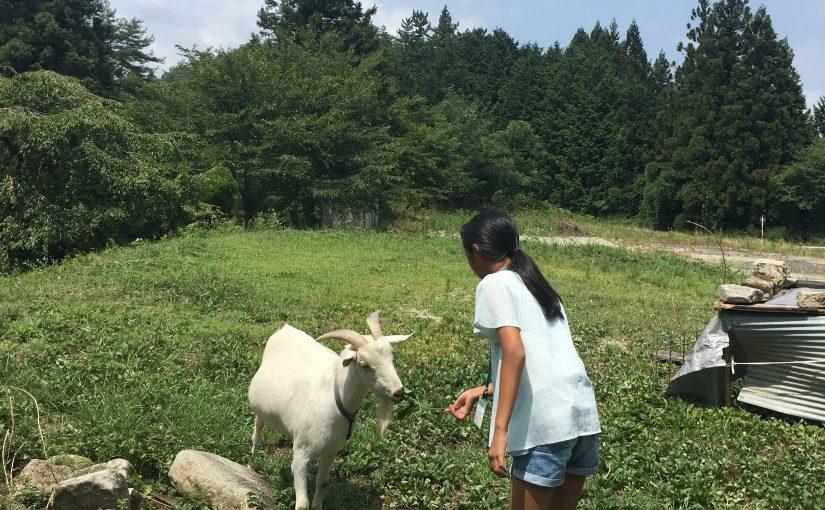 [打工換宿wwoof] 子供のキャンプ|小朋友農家體驗 (Day 2)
