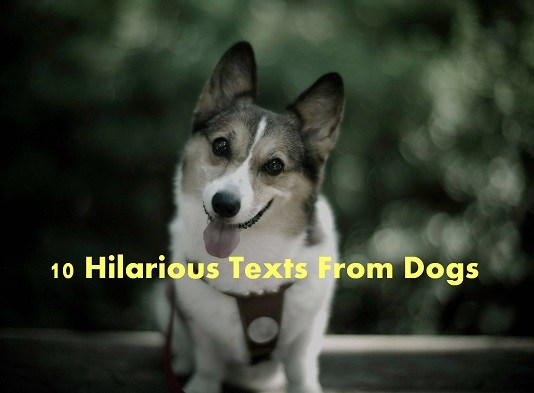 10 hilarious texts from dogs(1)
