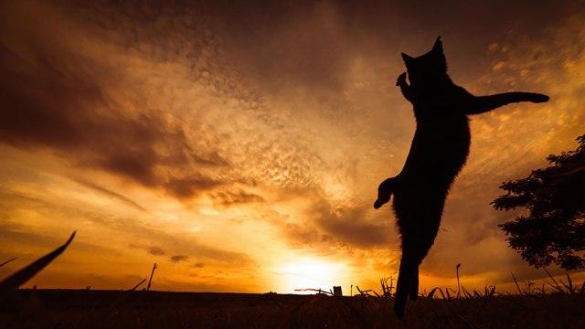 Jumping Cat 10