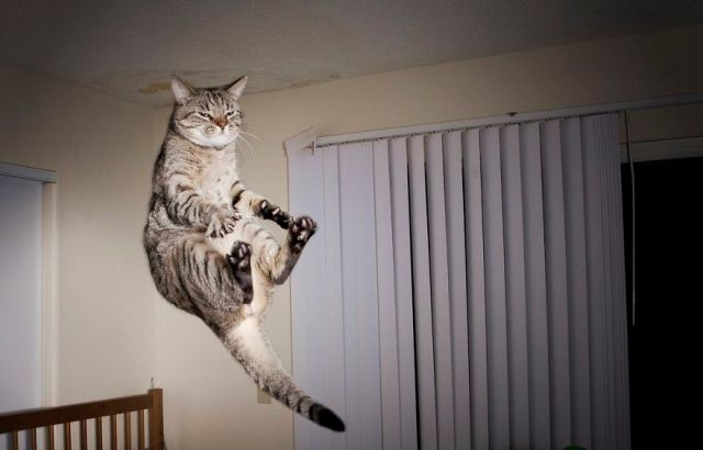 Jumping Cat 21