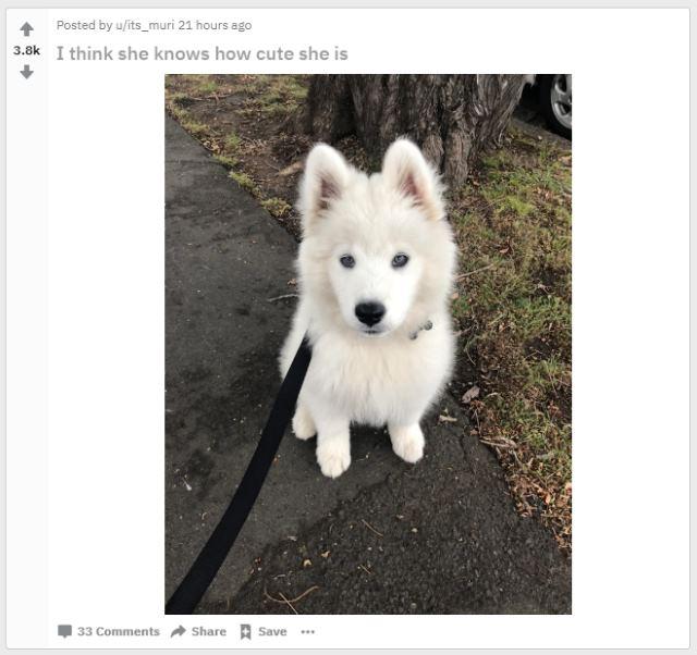 aww reddit