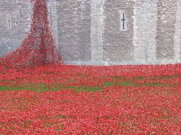 Ceramic poppies Tower of London 2014