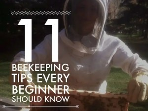 11 Beekeeping Tips that I wish that I knew when I started keeping honeybees.
