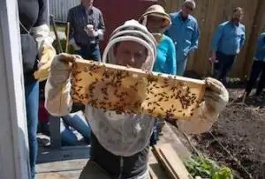 11 Beekeeping Tips Every Beginner Should Know