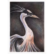 Majestic Bird - Soft pastels on sugar paper