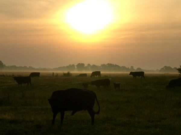 Tuesday Catchup: Heat, Hay, Bulls