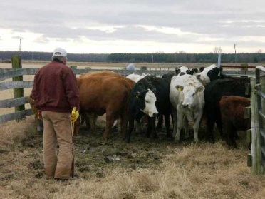 Family Cattle Farmer Agriculture Day
