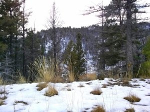 Flesher Pass Helena National Forest Montana Early Snow